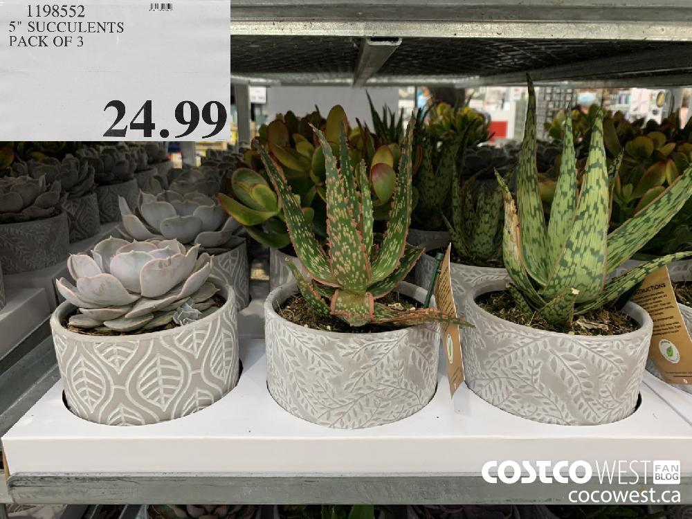 "1198552 5"" SUCCULENTS PACK OF 3 24.99"