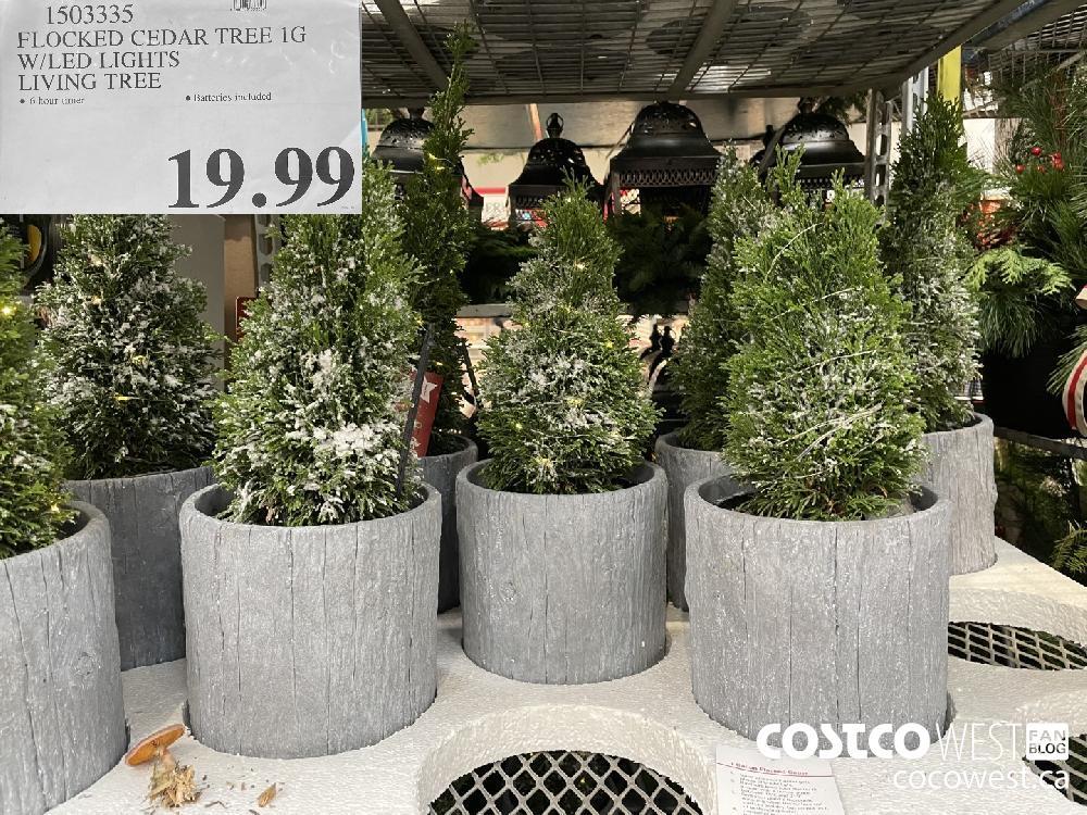 1503335 FLOCKED CEDAR TREE 1G W/LED LIGHTS LIVING TREE $19.99
