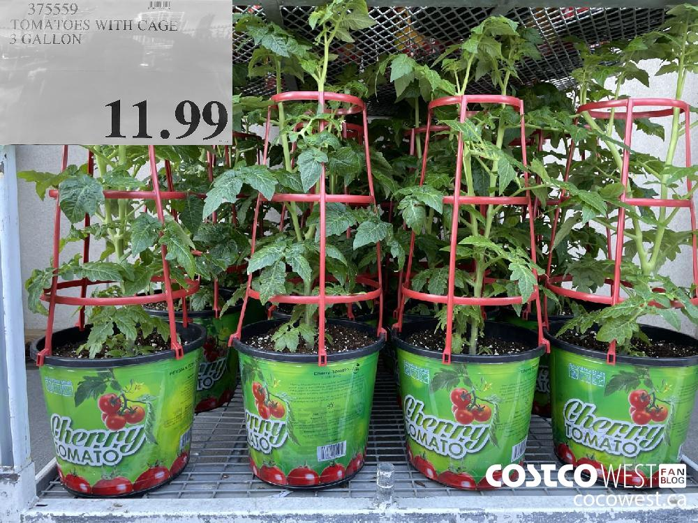 375559 TOMATOES WITH CAGE 3 GALLON $11.99
