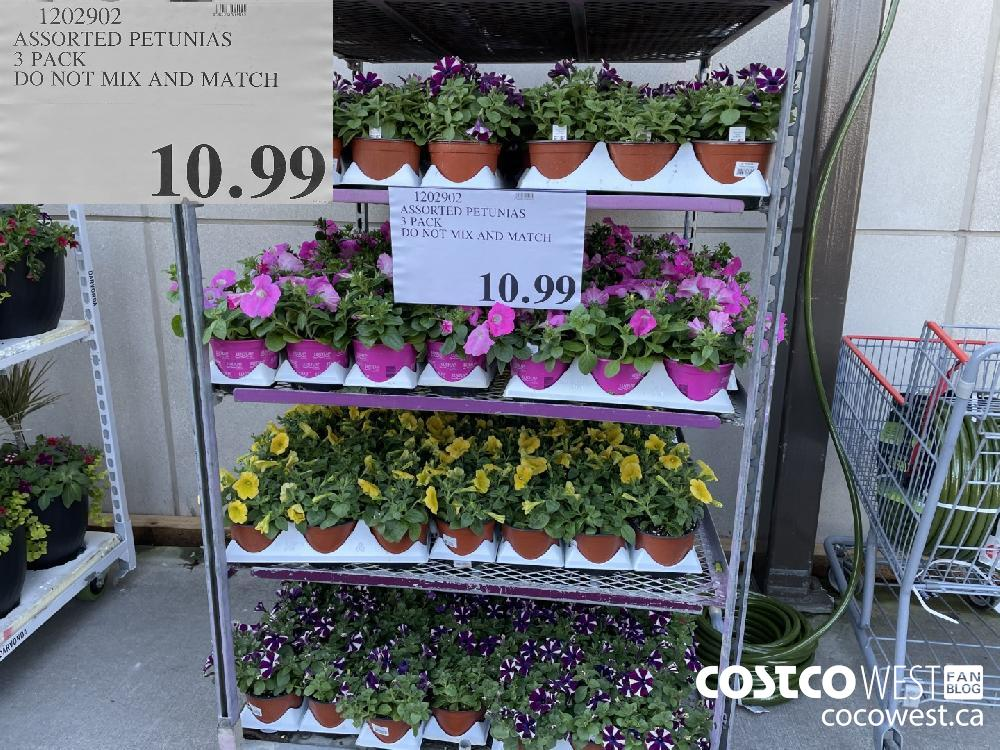 1202902 ASSORTED PETUNIAS 3 PACK DO NOT MIX AND MATCH $10.99