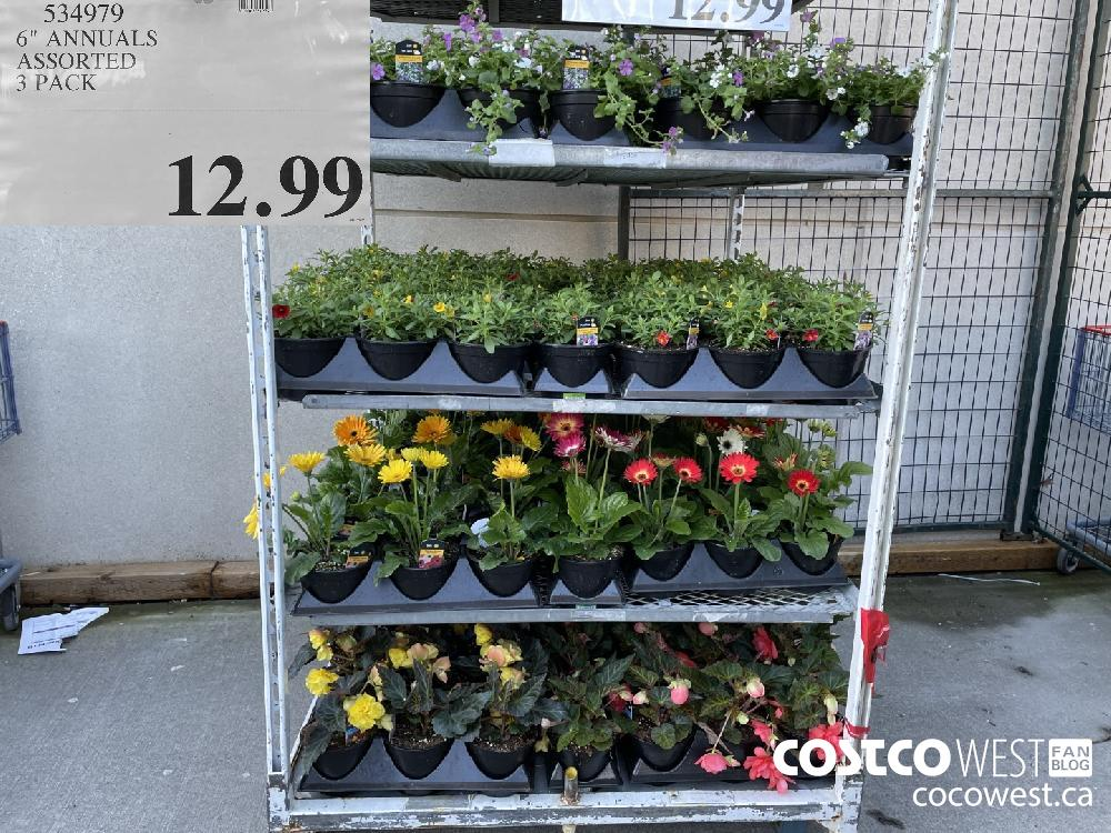 """534979 6"""" ANNUALS ASSORTED 3 PACK $12.99"""