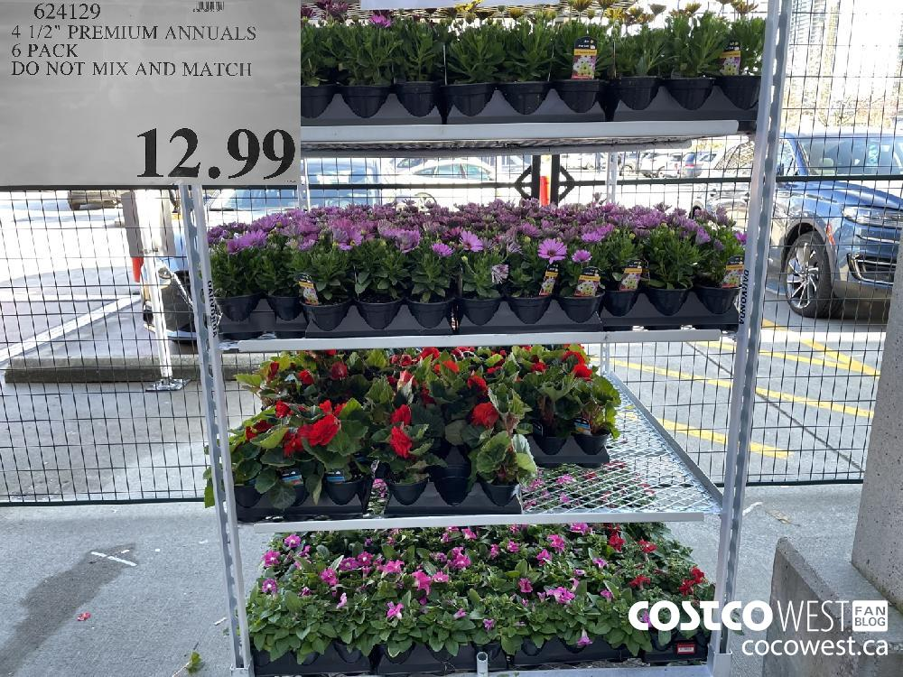 """624129 4 1/2"""" PREMIUM ANNUALS 6 PACK DO NOT MIX AND MATCH $12.99"""